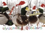 Christmas Quackers